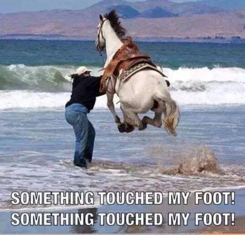 1somethingtouchedmyfoot