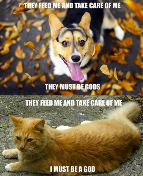 1catsanddogs