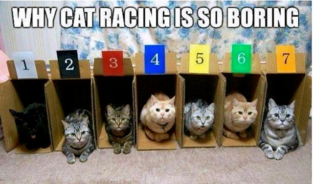 1catracing